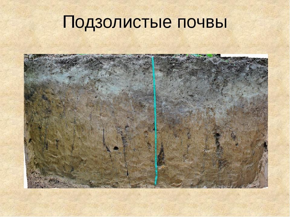 дерново подзолистые почвы что можно выращивать