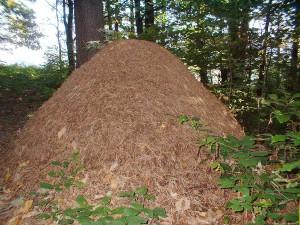 Фото про гнезда муравьев, philo-synthes.livejournal.com