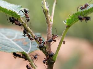 На фото - завелись дома муравьи как избавиться, pierres-et-decors.com
