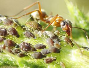 На фото - как избавиться от муравьев на участке, строительство-отделка-ремонт.рф