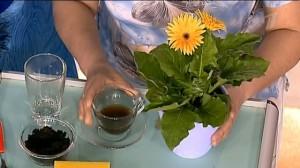 Способы применения кофейной гущи для подкормки
