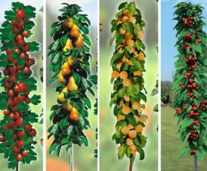 На фото - колоновидные деревья, vm.ru