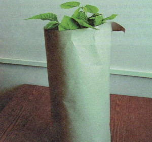 Капризный цветок цикломена: покупка и уход при транспортировке фото