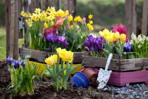 Фото летних и весенних луковичных цветов, decorateme.com