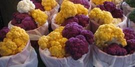 Цветная капуста: как сделать выращивание рассады на огороде любимым делом?