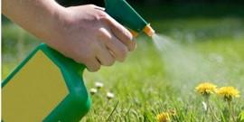Гербициды от сорняков – борьба за чистый огород