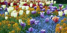 Луковичные цветы – лучшее украшение для вашего сада