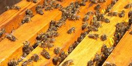 Пасека на дачном участке – как создать рай для пчел?