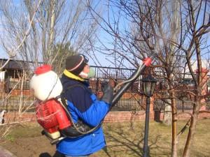 Фото осенней обработки сада мочевиной, 7dach.ru