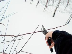 На фото - зимняя обрезка плодовых деревьев, ldacha.ru
