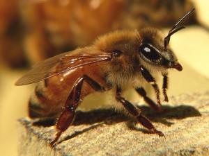 На фото - покупка пчел, it.tut.by