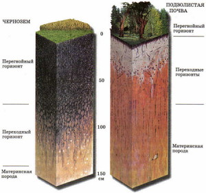 Фото сравнения подзолистых почв с черноземом, scienceland.info