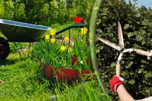 Какие бывают садовые ножницы: особенности выбора