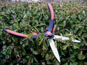 Какие бывают садовые ножницы: особенности выбора фото