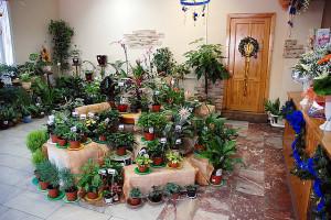 Фото выбора комнатных цветов, womenfromrussia.ru