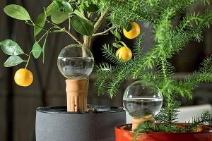 На фото - увлажнители для комнатных растений, flowers-of.ru