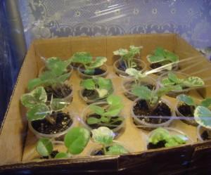 На фото - перевозка комнатных растений, velskforest.ru