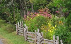 Декоративные ограждения для сада – необходимость или роскошь? фото