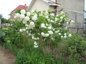 Что нужно знать – советы садоводам