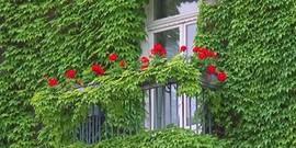 Озеленение загородного дома – какие нюансы существуют?