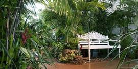 Тропические растения для зимнего сада