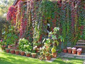 Вертикальное озеленение стен – красота на благо