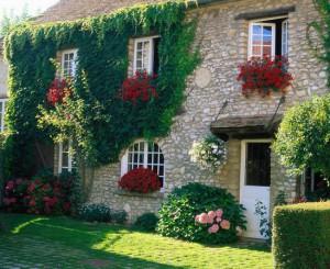 Вертикальное озеленение стен – красота на благо фото