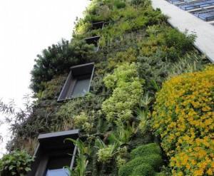 Озеленение загородного дома – что учитывать?