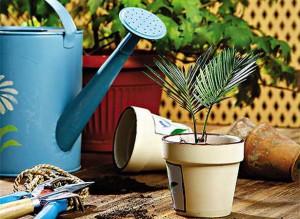 На фото - озеленение частных домов, высадка растений, flores.ucoz.ru/