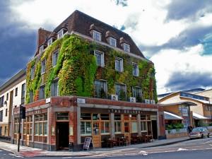 Как создается озеленение в условиях квартиры? фото