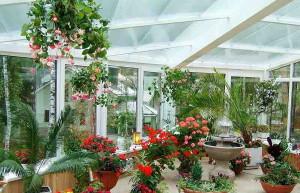 Фото выбора растений для зимнего сада, stroiki-doma.net