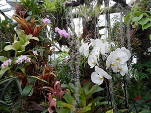 Фото орхидей в зимнем саду, rus-bazar.com