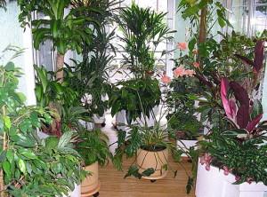 На фото - экзотические цветы для зимнего сада, shop.botanical-lab.ru