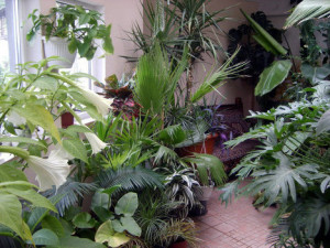 Фото субтропических цветов для зимнего сада, riarealty.ru