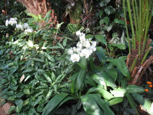 На фото - тропические цветы для зимнего сада, udachnyi.ru