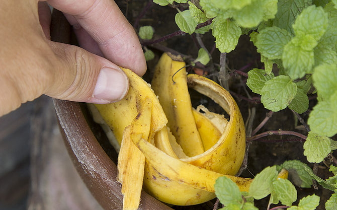 Как сделать удобрение для цветов из банановой