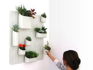 Фото про вертикальное озеленение в квартире, eremont.3dn.ru