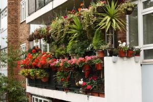 Фото про вертикальное озеленение балкона, dikc.com.ua
