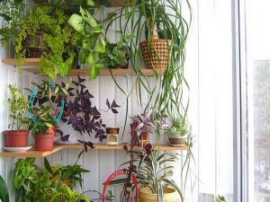 Фото про вертикальное озеленение балкона своими руками, balkonidea.ru