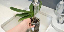 Полив орхидеи после пересадки – приводим цветок в чувства!
