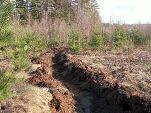 Фото бурых лесных почв, samlib.ru