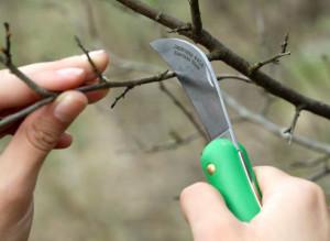 Фото окулировочного ножа для прививки плодовых деревьев, supersadovnik.ru