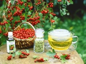 На фото - чай с боярышником, travamurava.blogspot.com