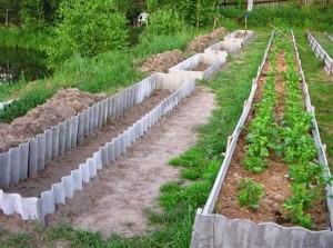 Фото грядок для посадки кабачков, moyuspech.blogspot.com