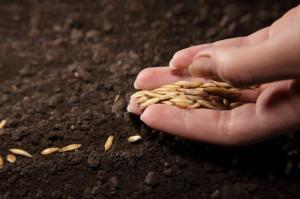 На фото - посадка семян кабачков, liveinternet.ru