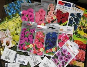 Как вырастить петунию из семян – секреты продолжительного цветения