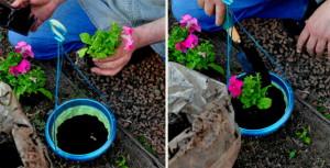Правильный уход за петунией из семян – залог красивого растения фото