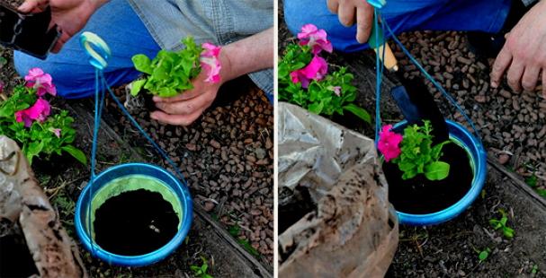 Петунии посадка и уход когда сеять семена