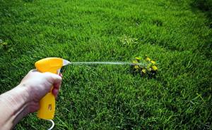На фото - обработка газона от сорняков, ukrgazon.com