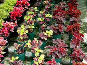 Ландшафтный дизайн клумбы – выбираем цветы фото